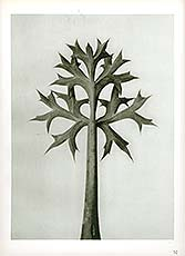 Photogravure of a plant