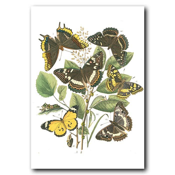 Fine art print for sale. Purple Emperor Butterflies