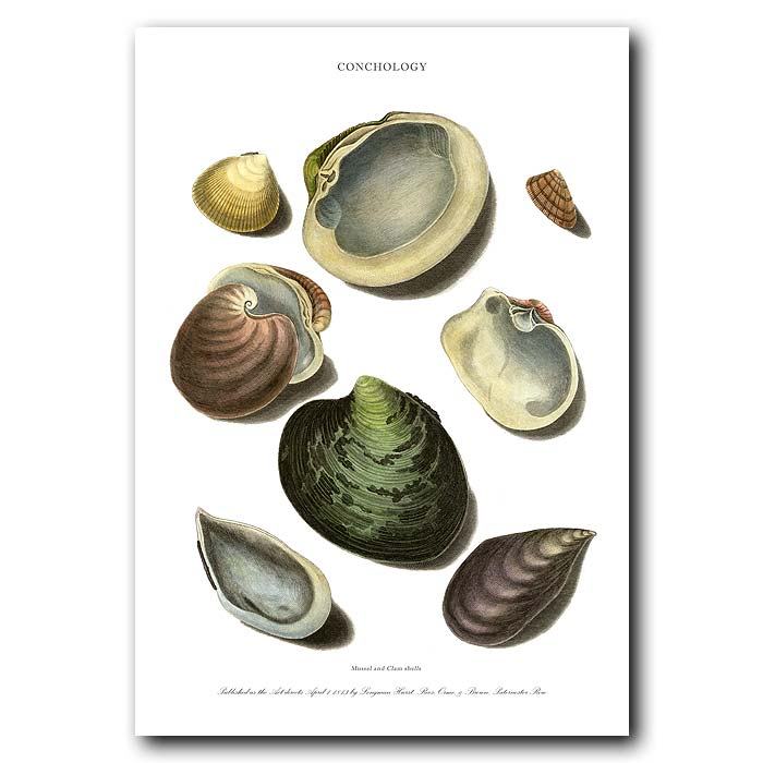 Fine art print for sale. Mussel & Clam Shells