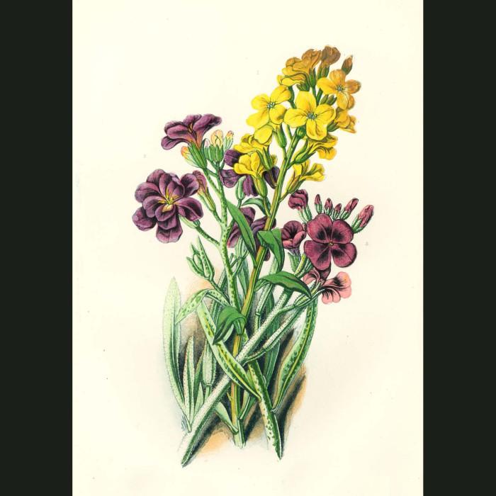 Fine art print for sale. Wallflower & Stock