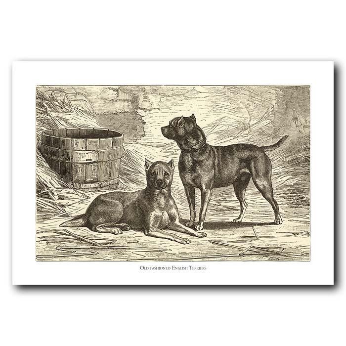 Fine art print for sale. English Terriers