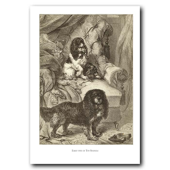 Fine art print for sale. Toy Spaniels