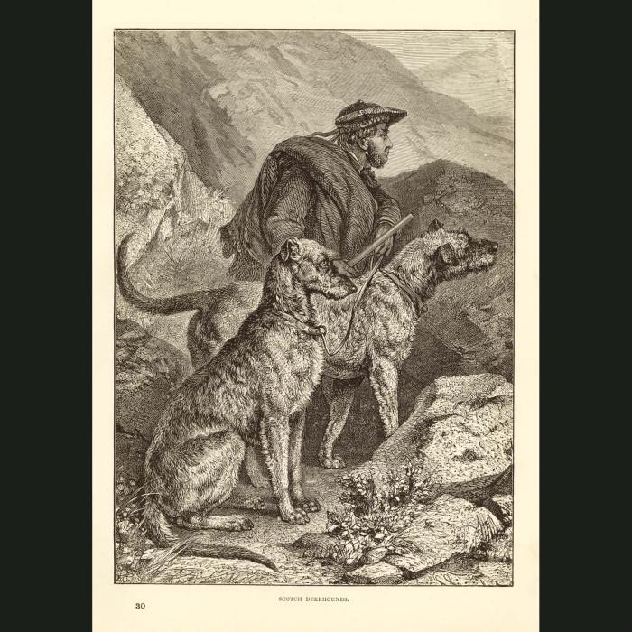 Fine art print for sale. Deerhounds