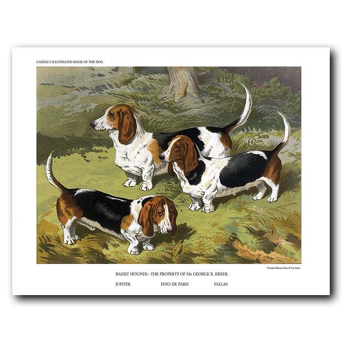 Fine art print for sale. Basset Hounds