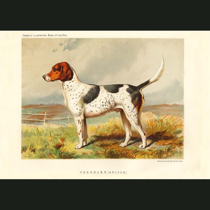 Fine art print for sale. Foxhound