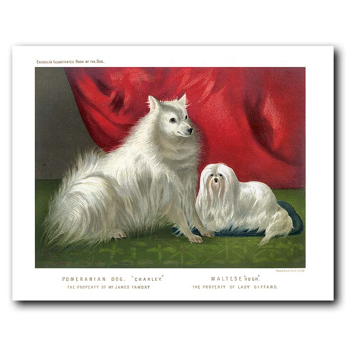 Fine art print for sale. Pomeranian Dog and Maltese Dog
