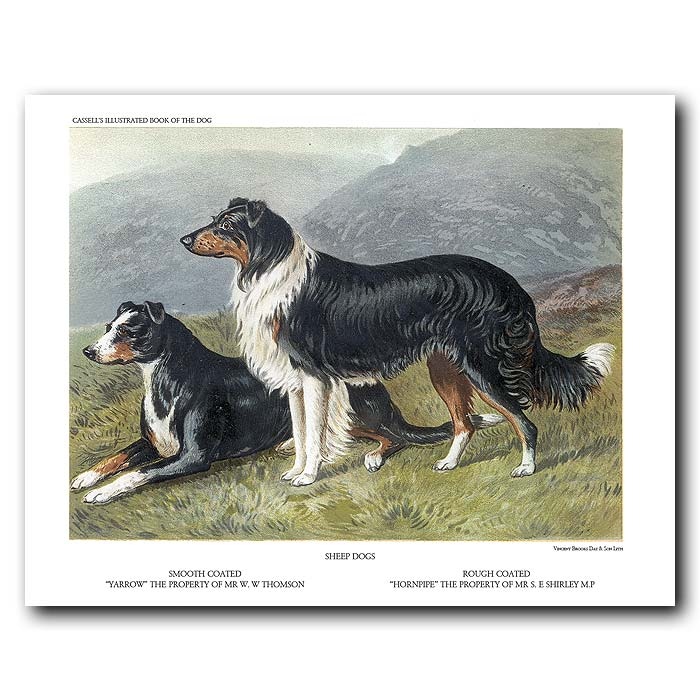 Fine art print for sale. Sheep Dogs - Smooth and Rough Coated
