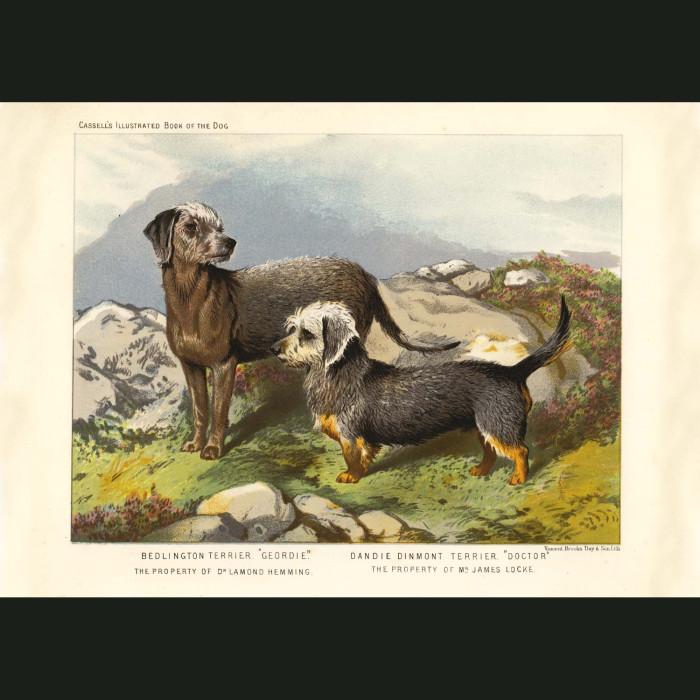 Fine art print for sale. Bedlington and Dandie Dinmont Terriers