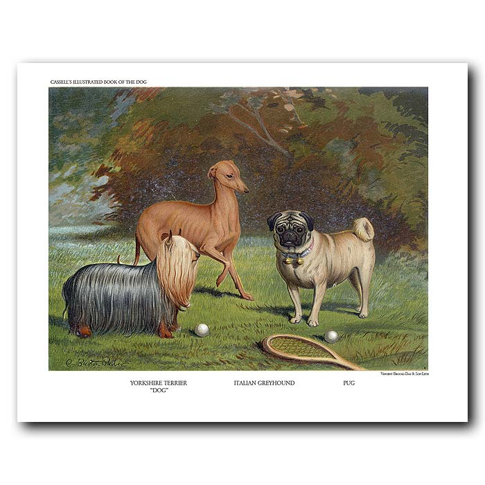 Fine art print for sale. Pug, Italian Greyhound and Yorkshire Terrier