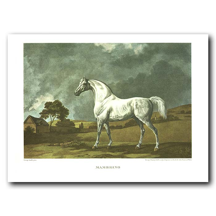 Fine art print for sale. Thoroughbred Horse Mambrino
