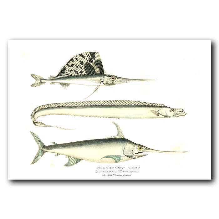 Fine art print for sale. Atlantic Sailfish, Large Head Hairtail & Swordfish