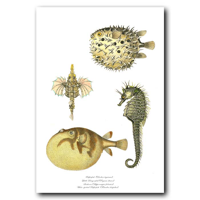 Fine art print for sale. Pufferfish, Little Dragonfish, Seahorse & White-spotted Pufferfish