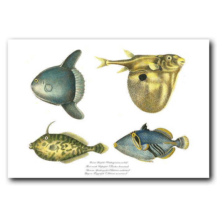 Fine art print for sale. Sunfish, Three-tooth Pufferfish, Unicorn Leatherjacket & Lagoon Triggerfish