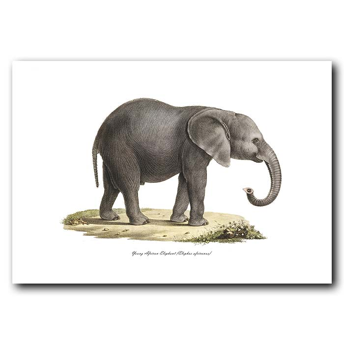 Fine art print for sale. Baby African Elephant