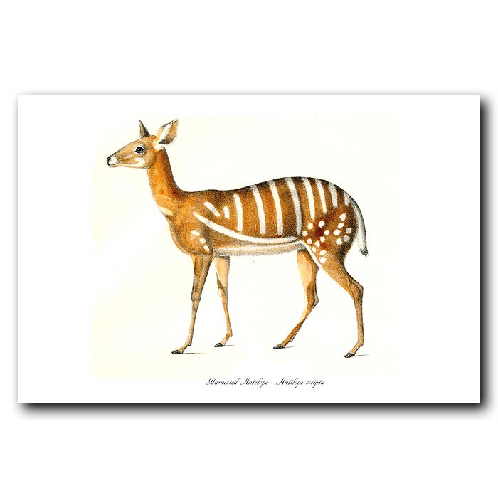 Fine art print for sale. Harnessed Antelope