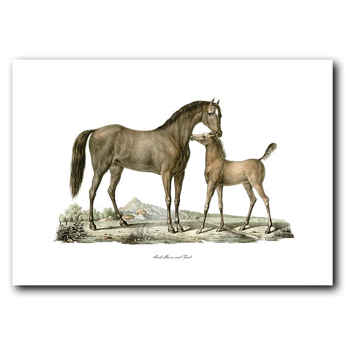 Fine art print for sale. Arab Horse And Foal