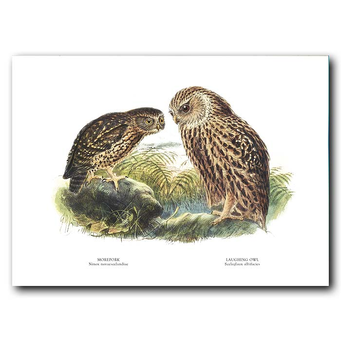 Fine art print for sale. Morepork And Laughing Owl