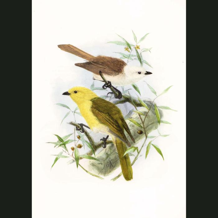 Fine art print for sale. Yellowhead And Whitehead