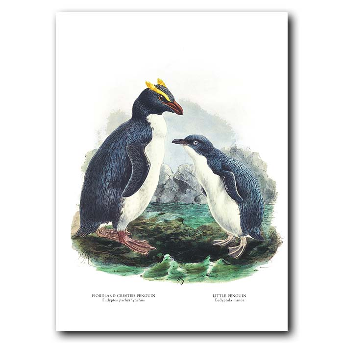 Fine art print for sale. Little Penguin And Yellow-Crested Penguin