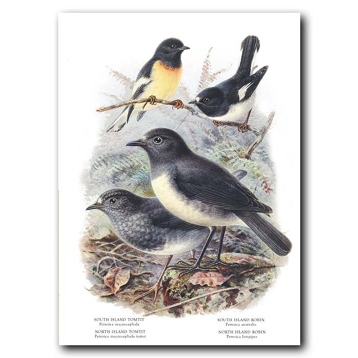 Fine art print for sale. Tomtits and Robins