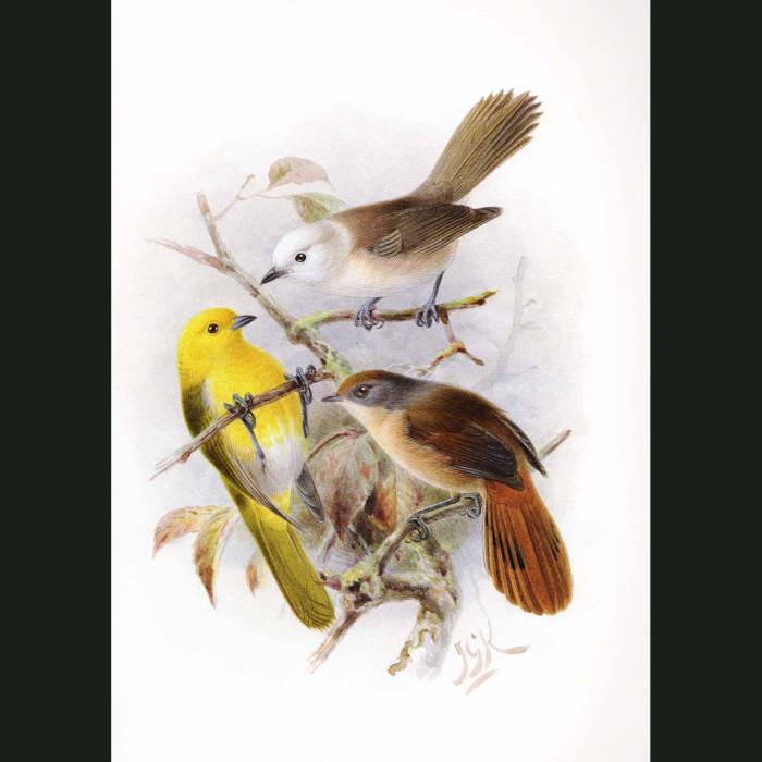 Fine art print for sale. Yellowhead, Whitehead And Brown Creeper