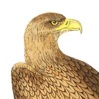 Bird of Prey Art
