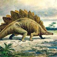 Fossils, Prehistoric Art