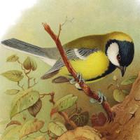 Other Bird Art