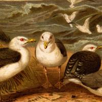 Seabird Art