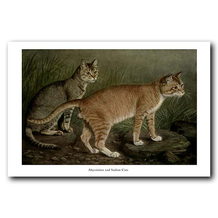 Fine art print for sale. Abyssinian and Indian Cats