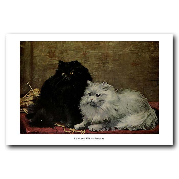 Fine art print for sale. Black and White Persian Cats