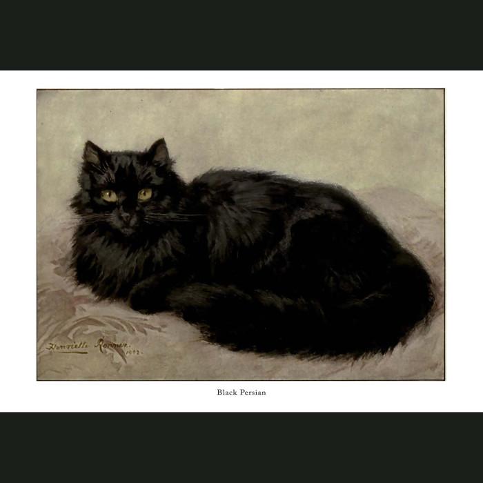 Fine art print for sale. Black Persian Cat