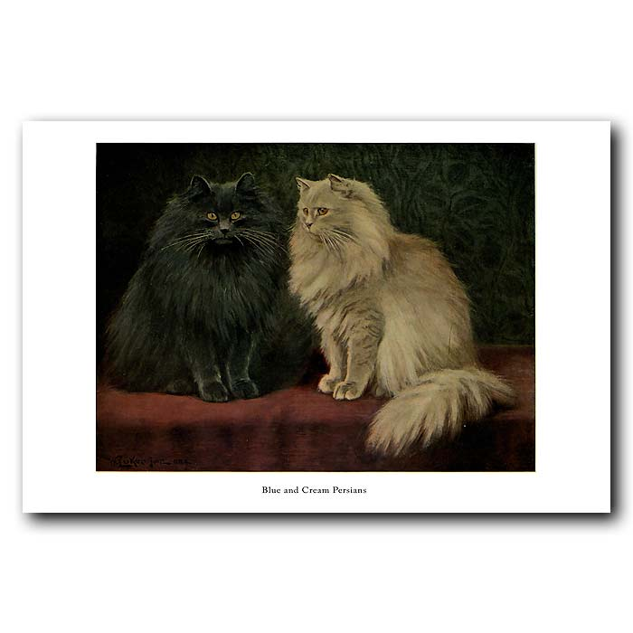 Fine art print for sale. Blue and Cream Persian Cats