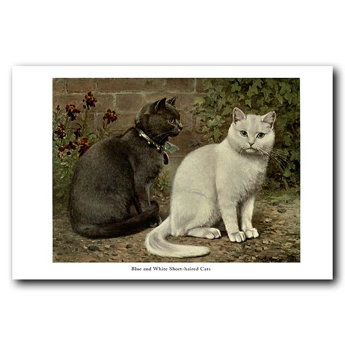 Fine art print for sale. Blue and White Short-haired Cats