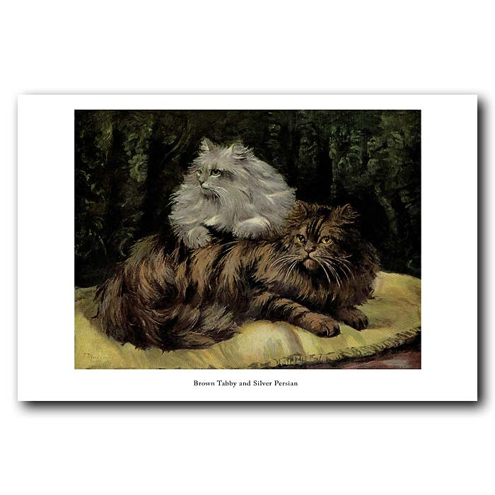 Fine art print for sale. Brown Tabby and Silver Persian Cats