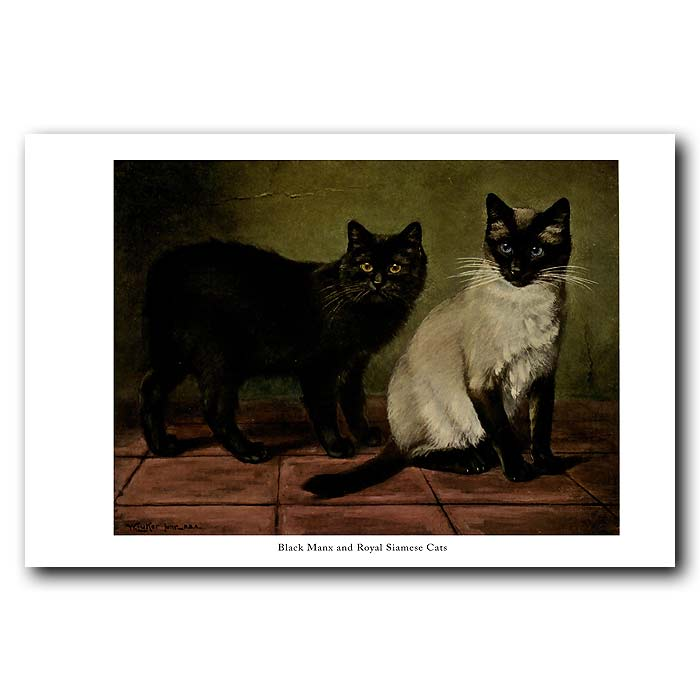 Fine art print for sale. Black Manx and Royal Siamese Cats