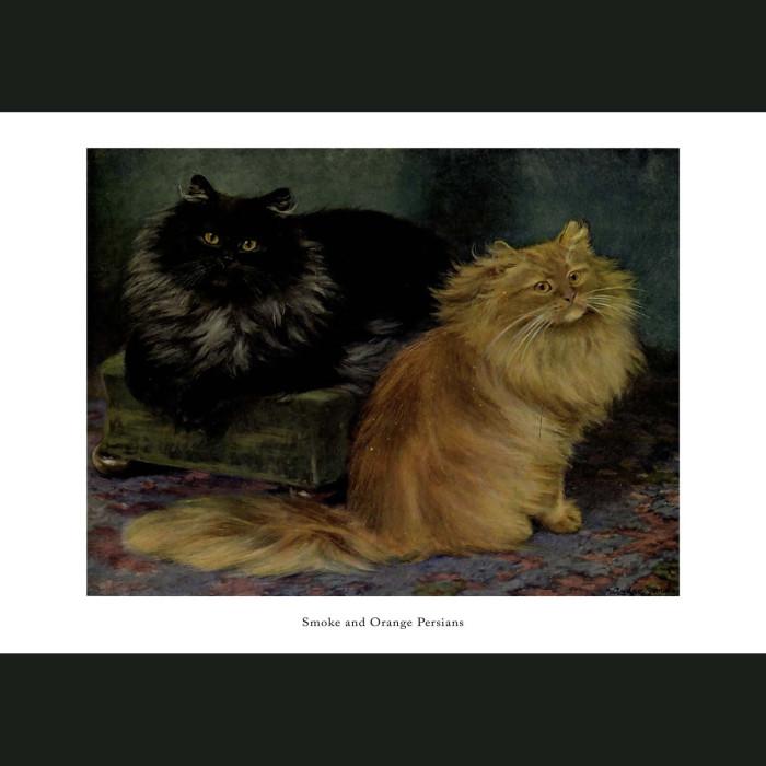 Fine art print for sale. Smoke and Orange Persian Cats
