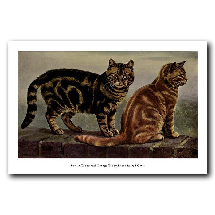 Fine art print for sale. Brown and Orange Short-haired Tabby Cats
