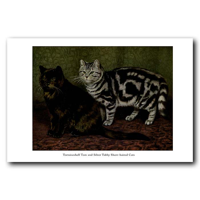 Fine art print for sale. Tortoiseshell Tom and Silver Tabby Cats