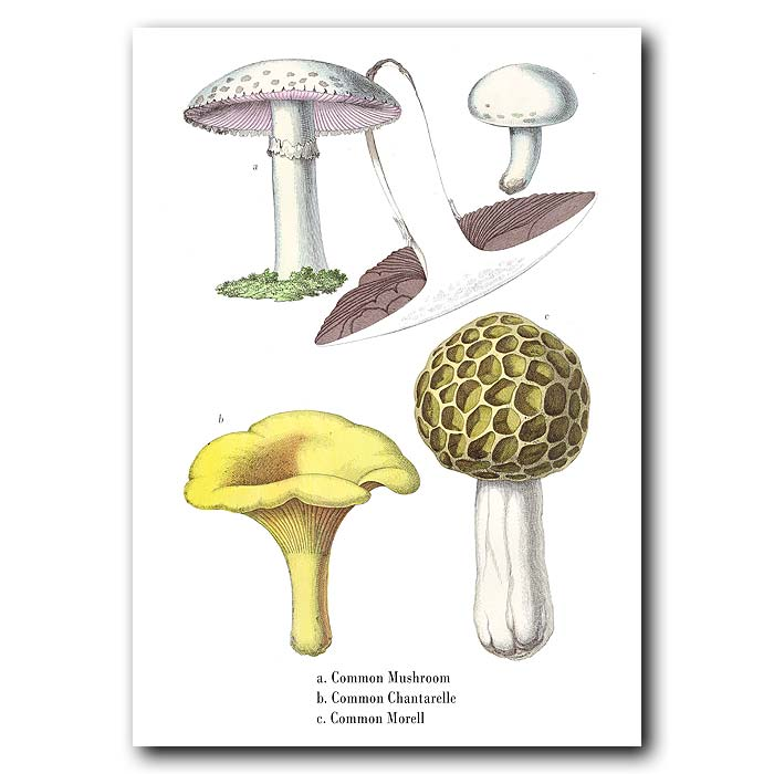 Fine art print for sale. Mushrooms