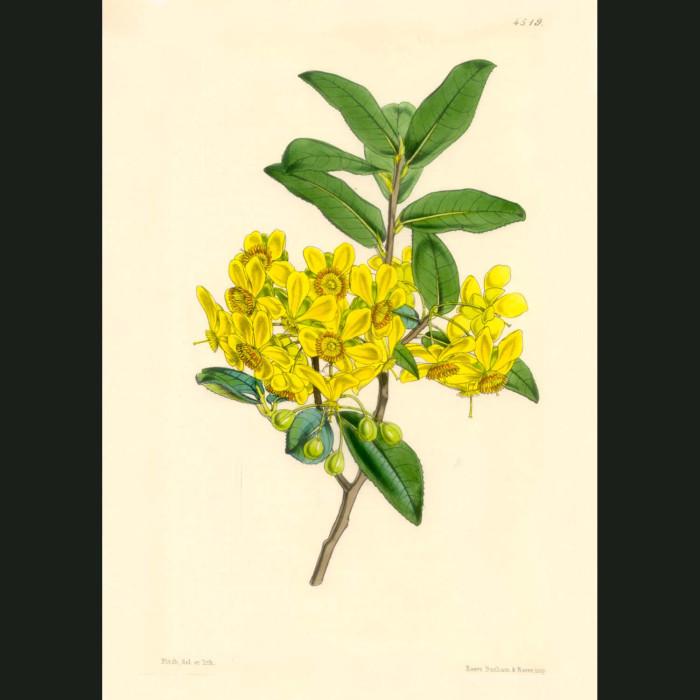 Fine art print for sale. Birds Eye Flowers