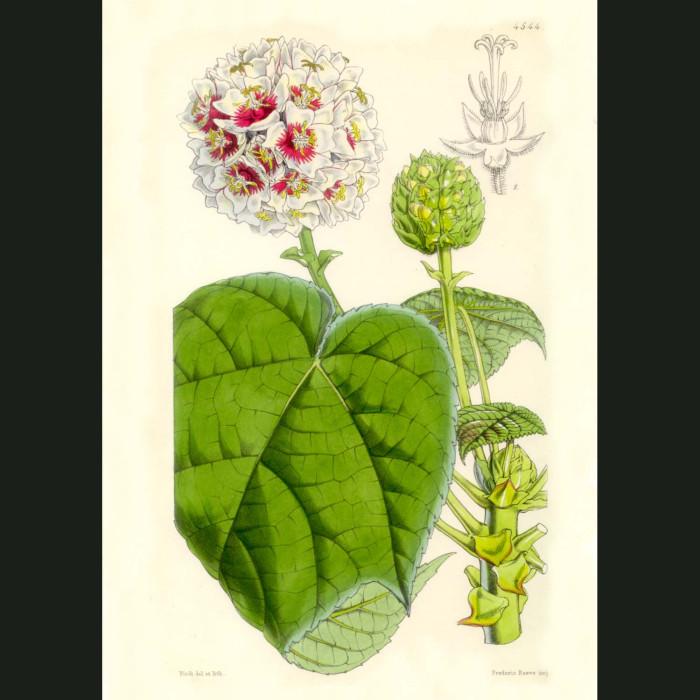 Fine art print for sale. Tropical Tree Flowers