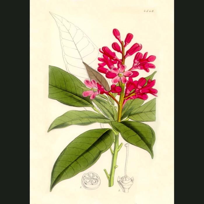 Fine art print for sale. Red Flowered Almeida