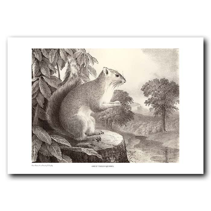 Fine art print for sale. Great-Tailed Squirrel