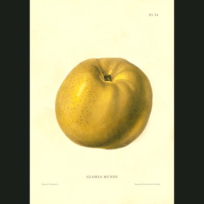 Fine art print for sale. Gloria Mundi Apple