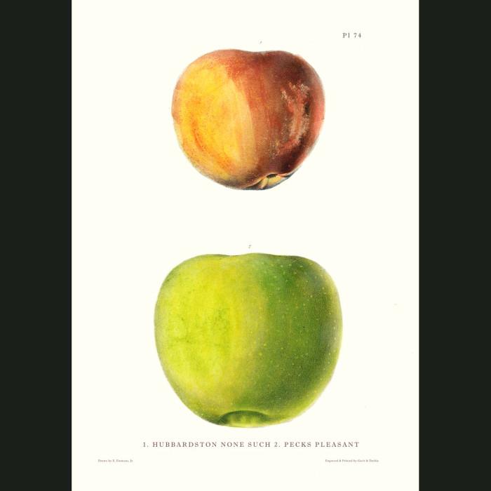 Fine art print for sale. Hubbardston & Pleasant Apples