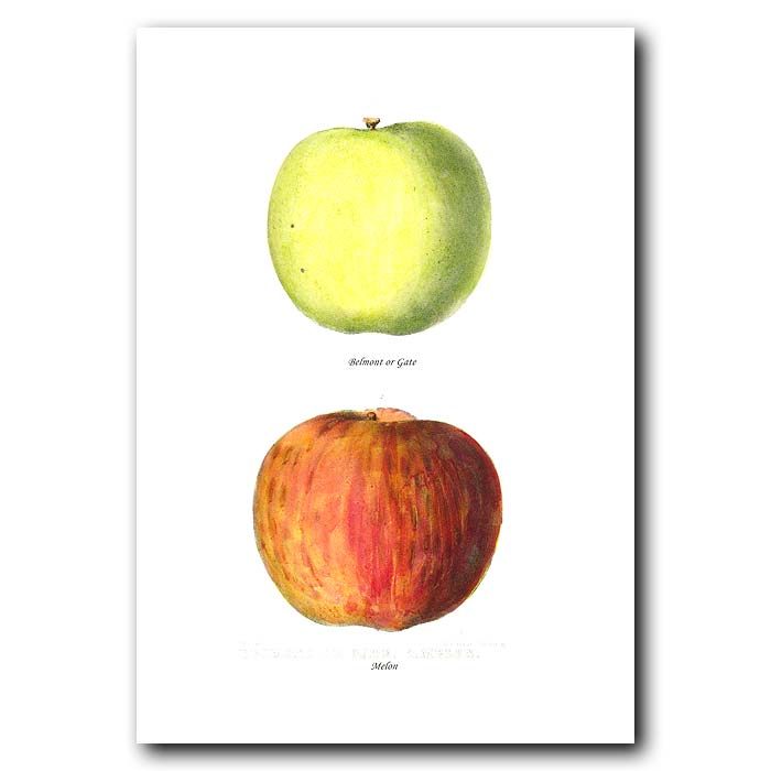 Fine art print for sale. Gate And Melon Apples