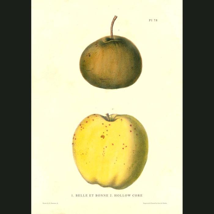 Fine art print for sale. Belle Et Bonne & Hollow Gore Apples