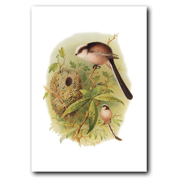 Fine art print for sale. Long-Tailed Tit