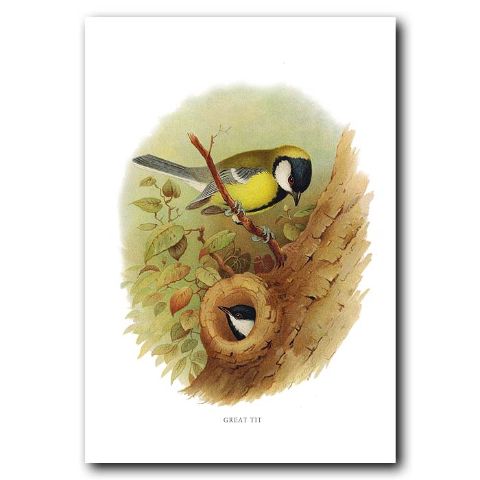 Fine art print for sale. Great Tit And Nest